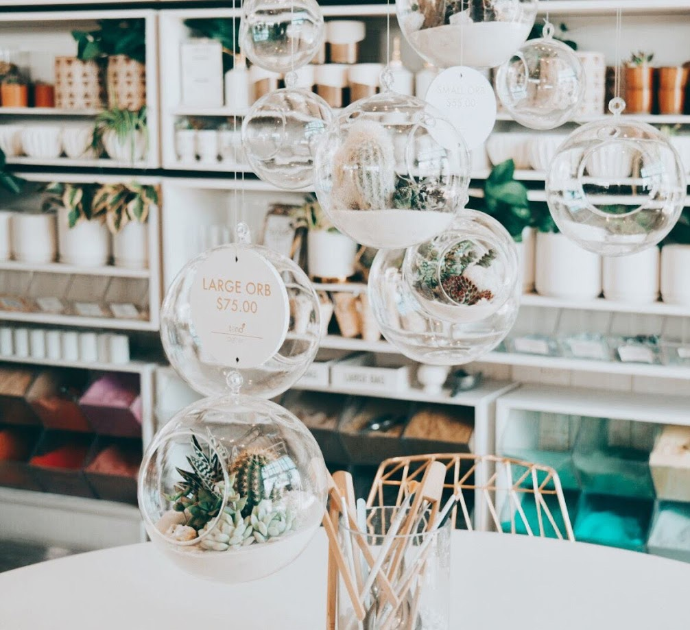 succulents in glass orbs